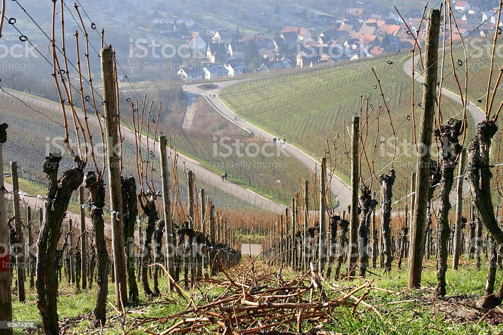 Winter Vineyard royalty-free stock photo