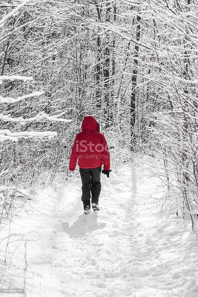 Winter walk in the woods royalty-free stock photo