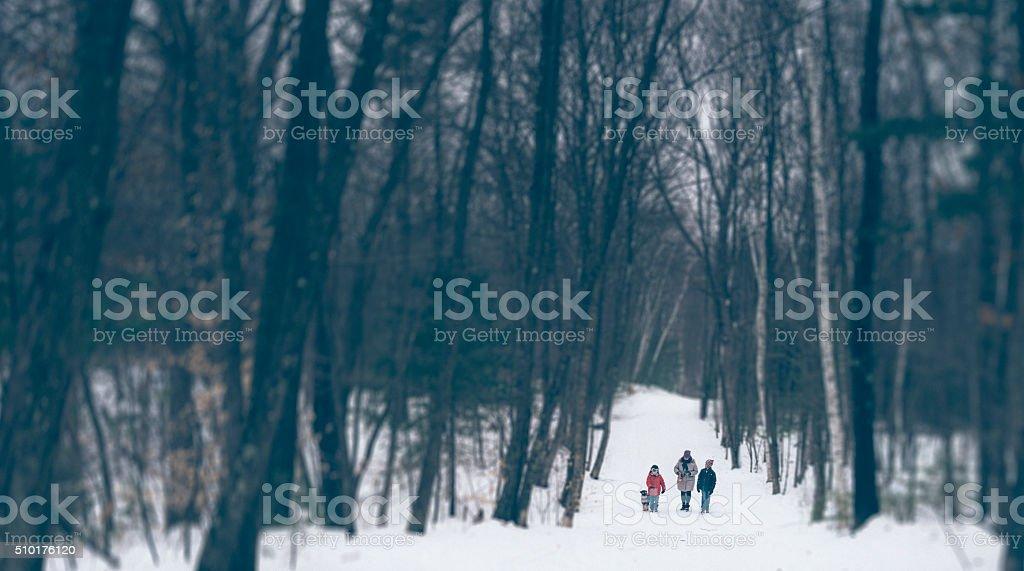 Winter walk in the woods stock photo