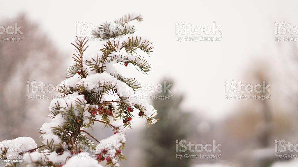 Winter Wallpaper stock photo