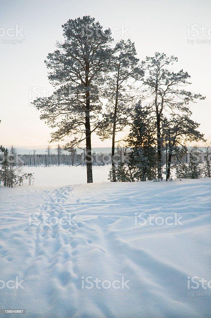 Winter, Western Siberia. stock photo