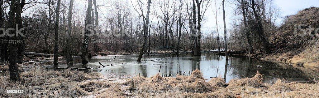 Winter Wetlands Panorama stock photo