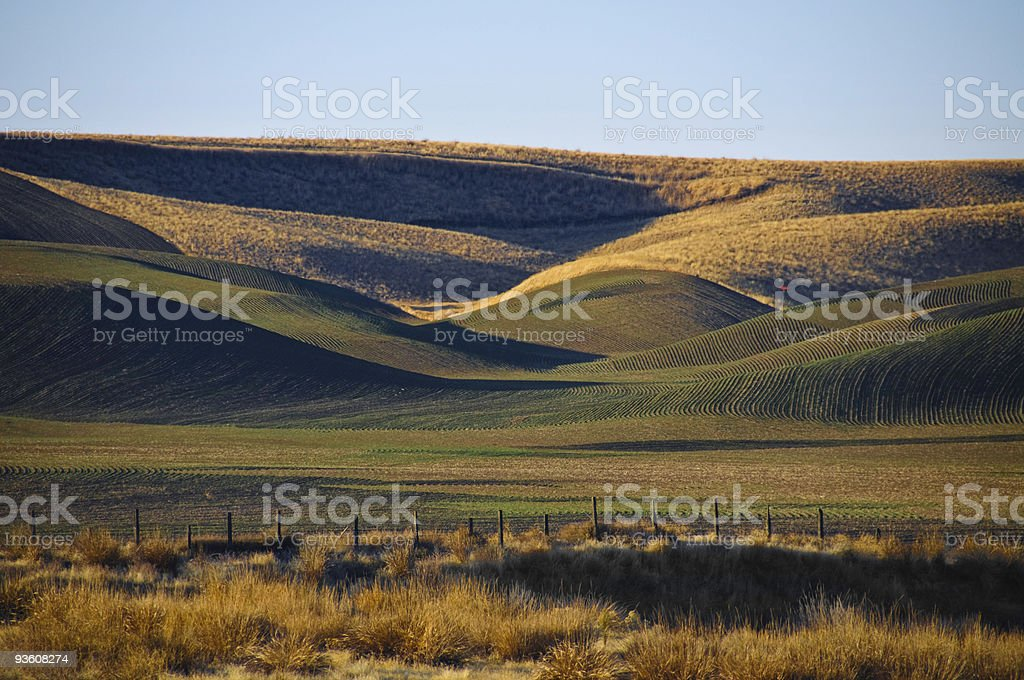 Winter wheat on the rolling hills stock photo