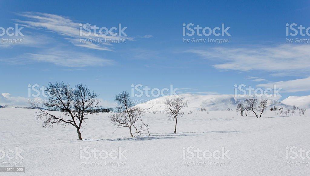 Winter Wilderness area in Sweden stock photo
