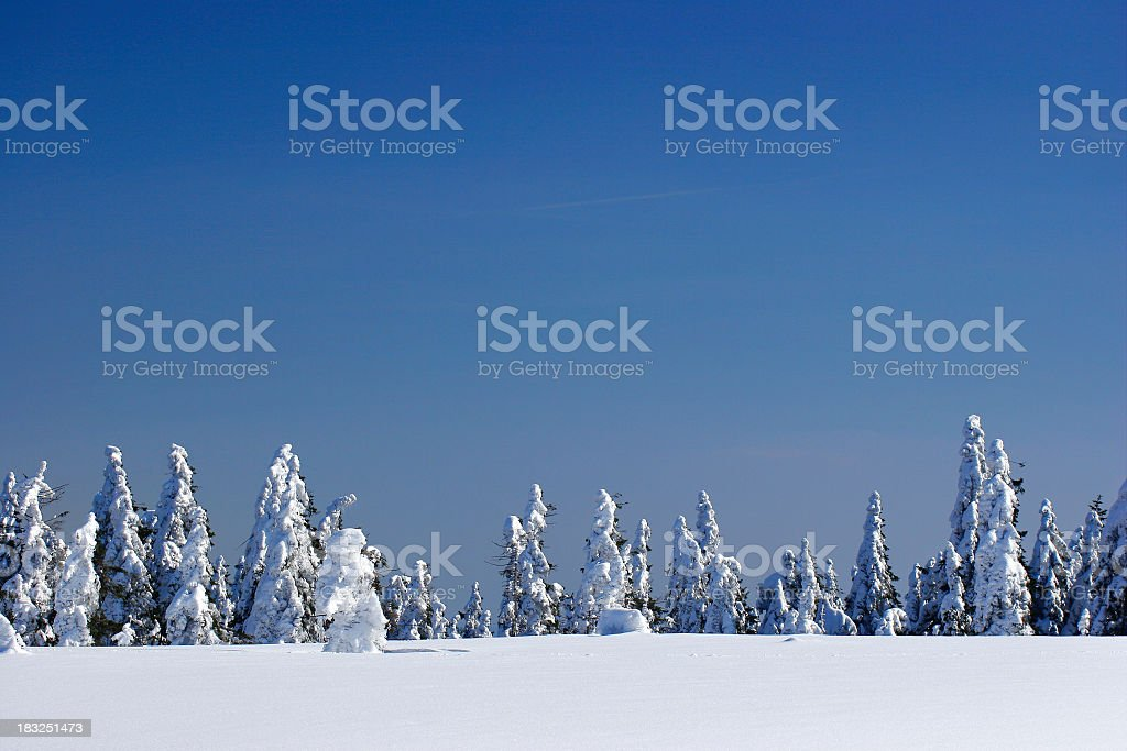 Winter Wilderness IV royalty-free stock photo