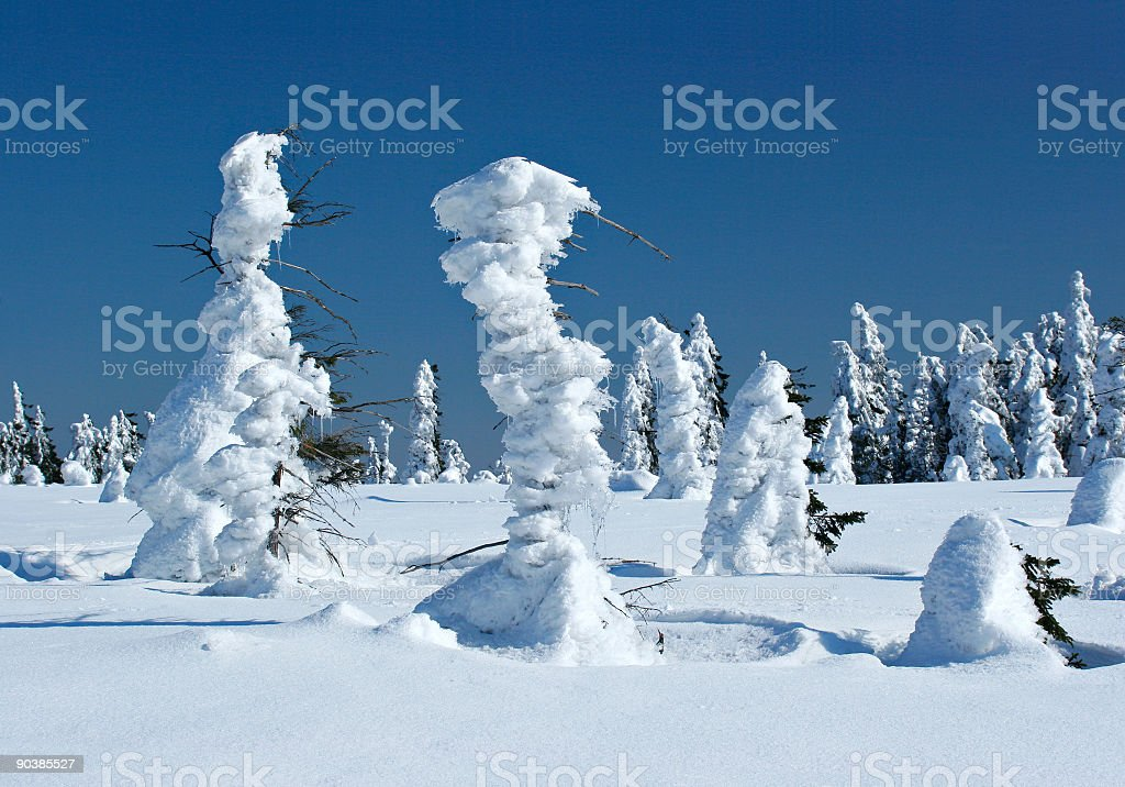 Winter Wilderness royalty-free stock photo