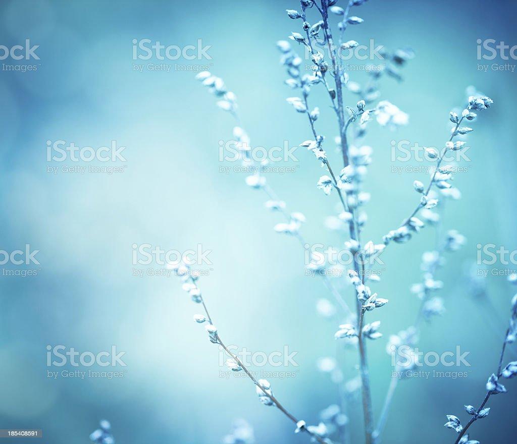 Winter wildflowers royalty-free stock photo