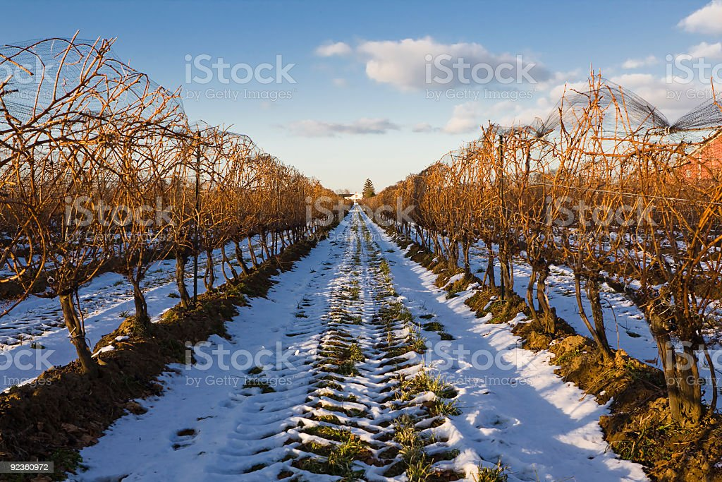 Winter Winery stock photo
