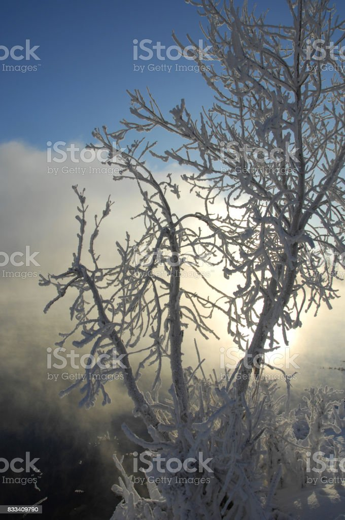 winter, winter-tide, winter-time stock photo