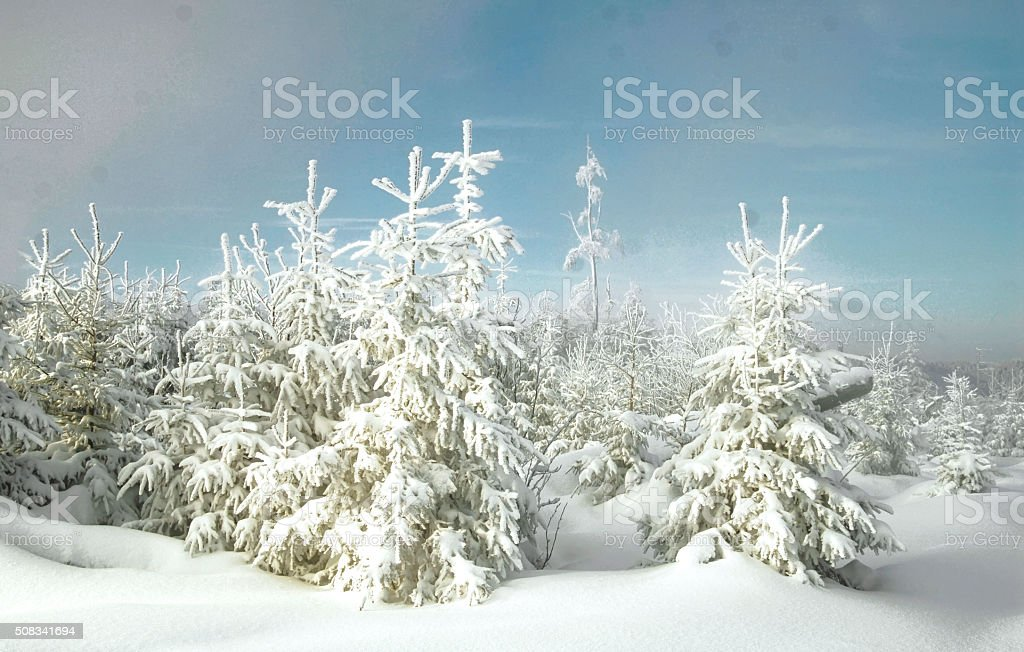 Winter with snow in the Black Forest stock photo