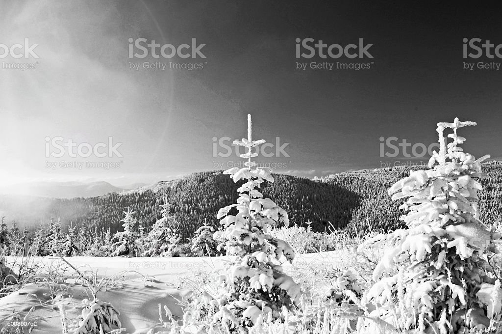 Winter with snow in the mountains black / white stock photo
