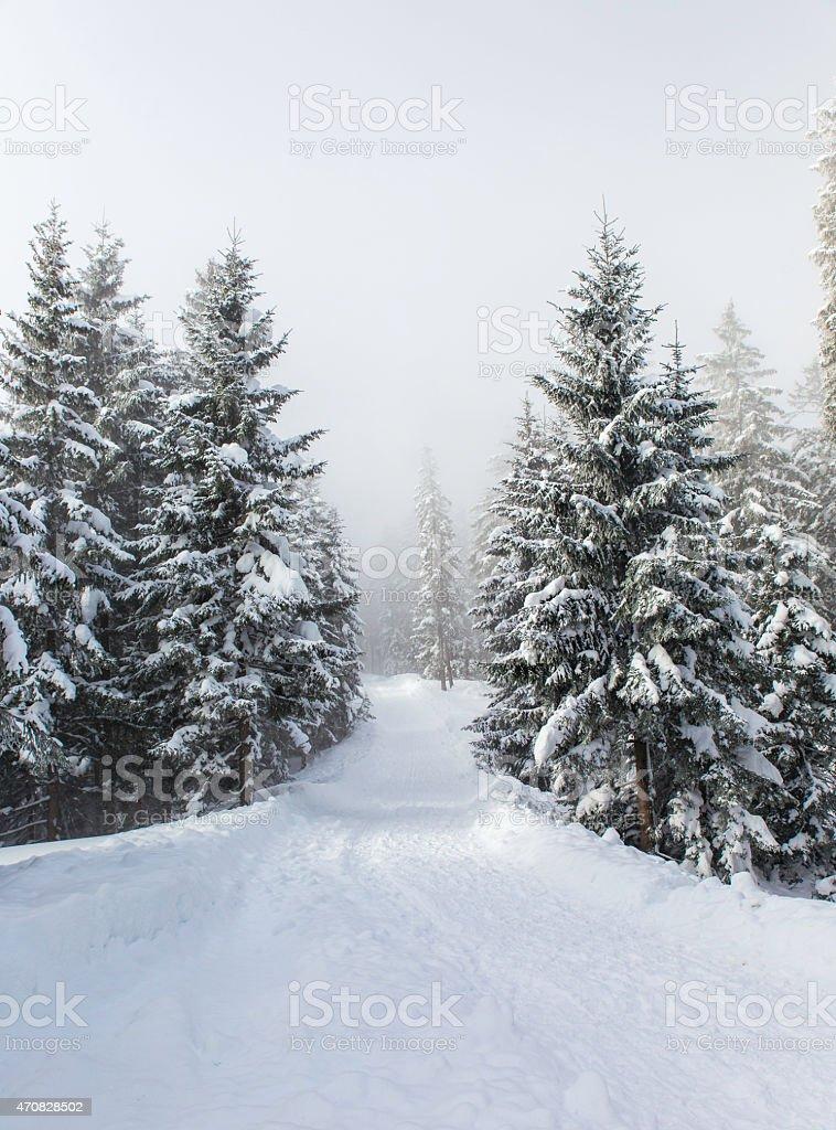 winter wonderland stock photo