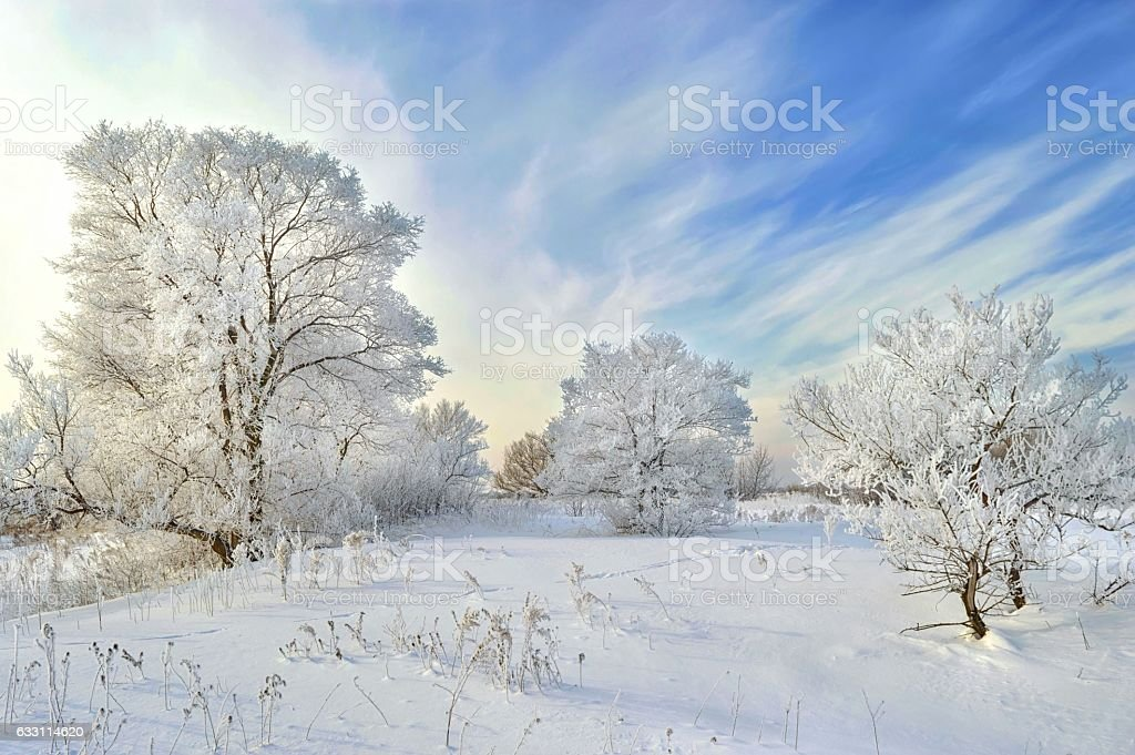 Winter wonderland! stock photo