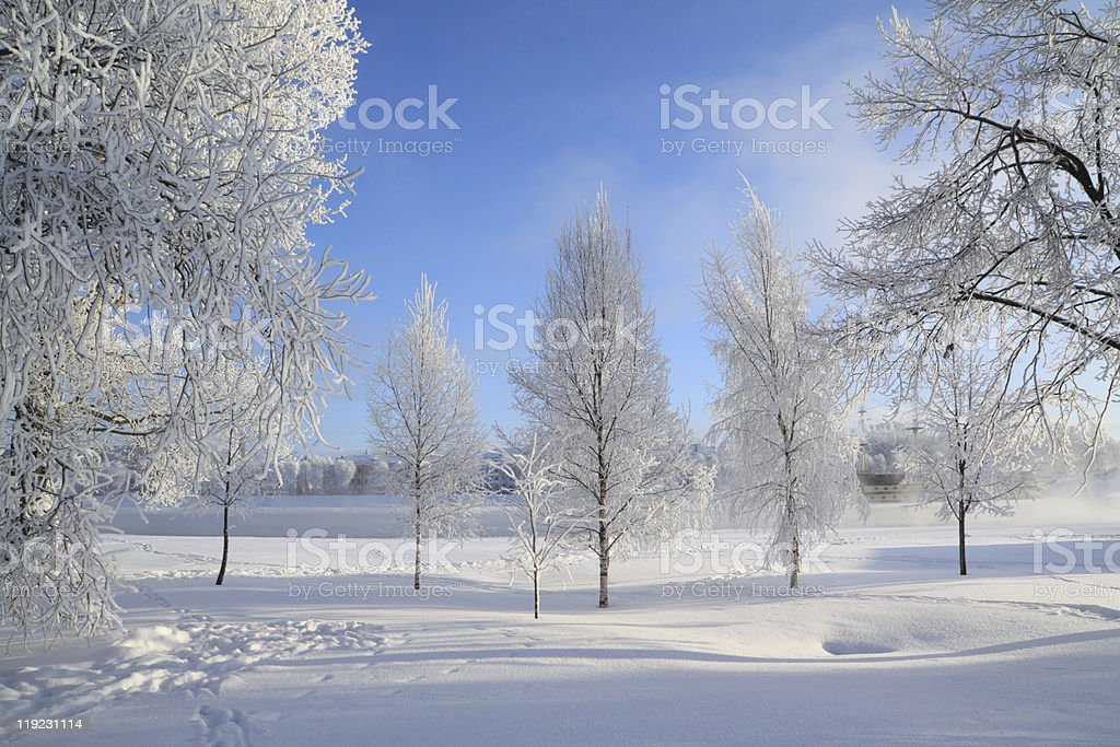 winter wood royalty-free stock photo