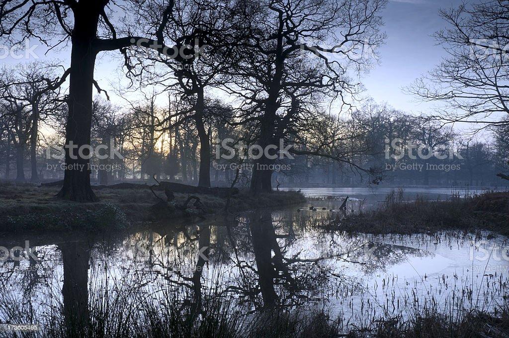 Winter Woodland Dawn royalty-free stock photo