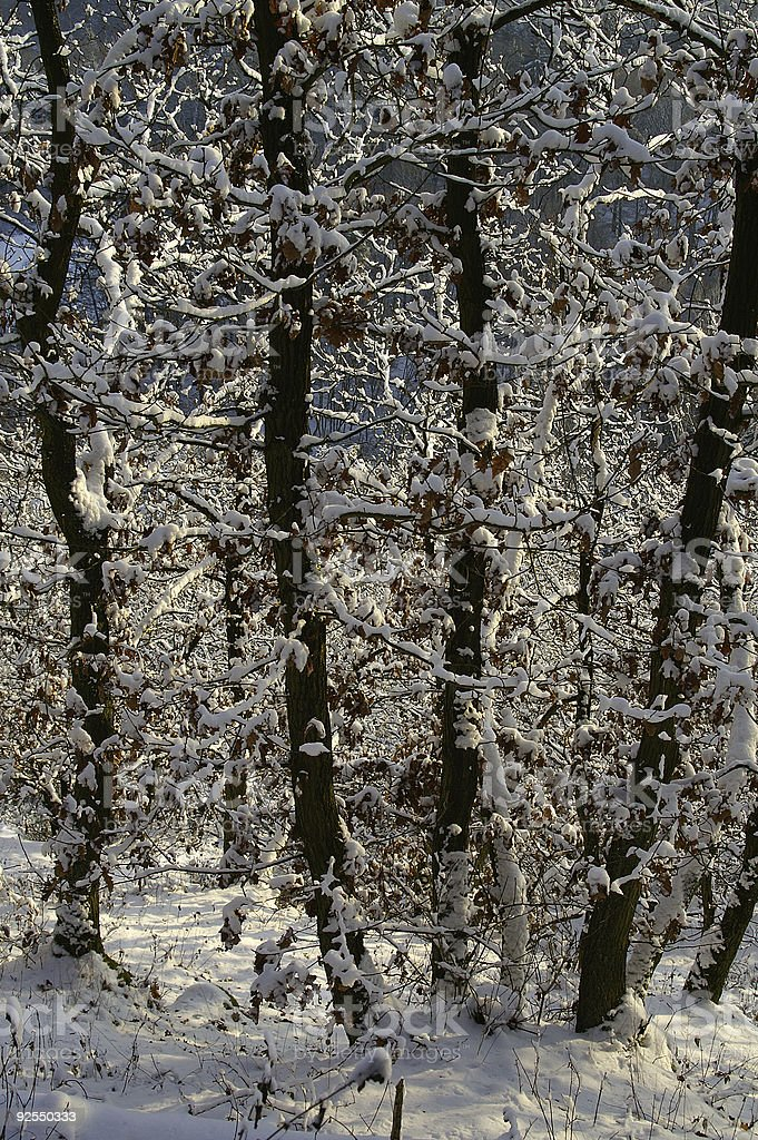 Winter woods in January 2 royalty-free stock photo