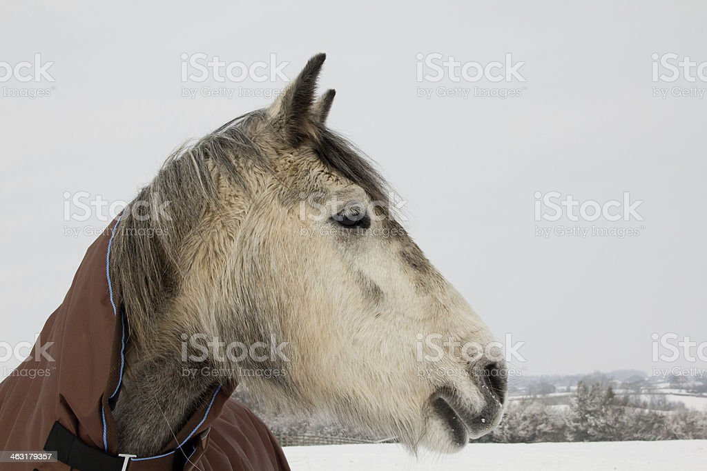Winter woollies royalty-free stock photo