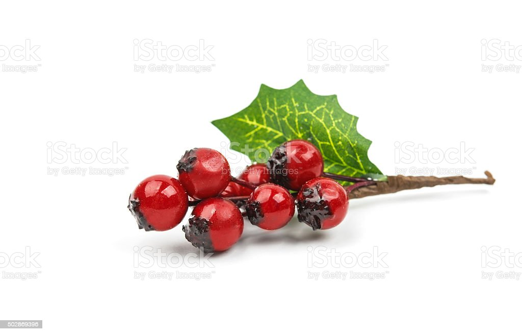 winterberry Christmas branch with red holly berries stock photo