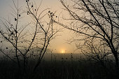 RURAL LANDSCAPE WINTER.Between Apulia and Basilicata:Sunrise through the fog.-ITALY-