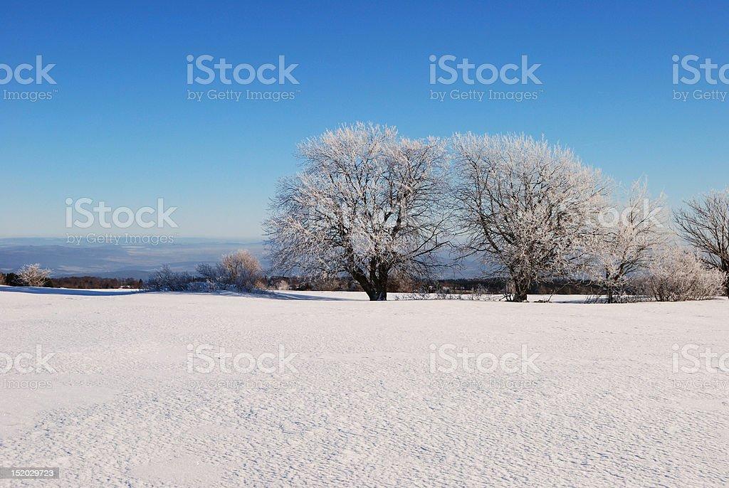 Winterdream stock photo