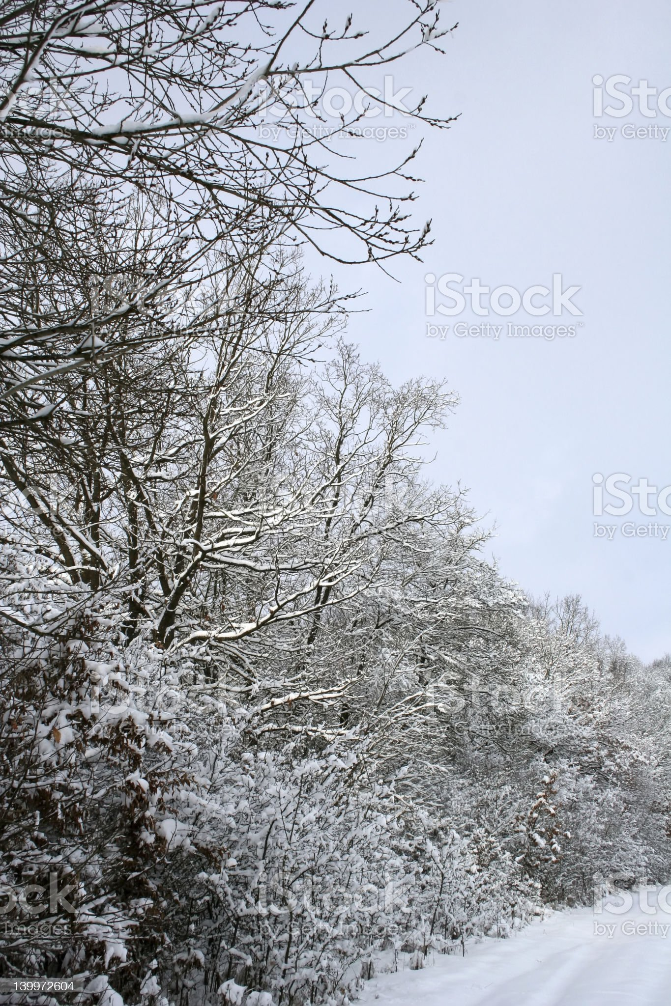 Winter-Landscape royalty-free stock photo