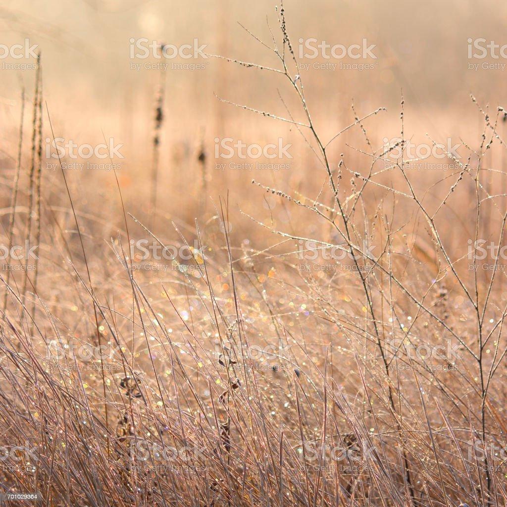 Winter's ballgown stock photo