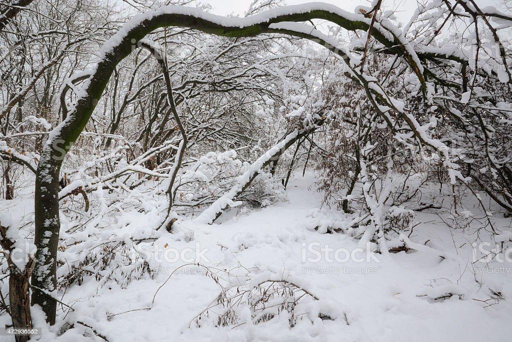 winters bosque foto de stock libre de derechos