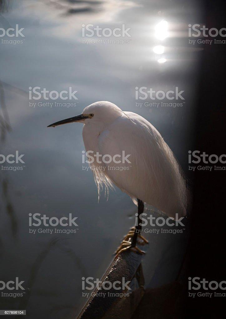 Winter's heron stock photo