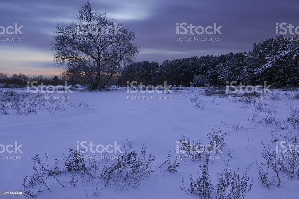 winters la noche foto de stock libre de derechos