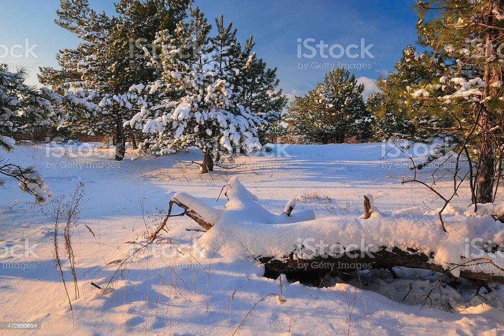 winters cuento foto de stock libre de derechos