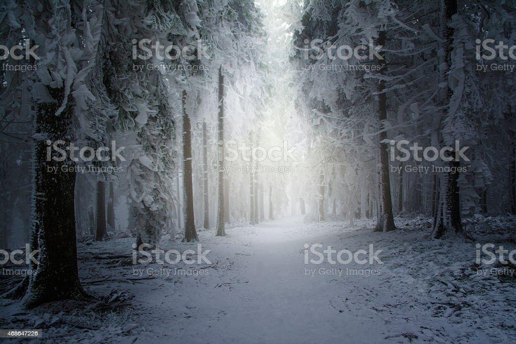 Winterwald auf dem Feldberg stock photo