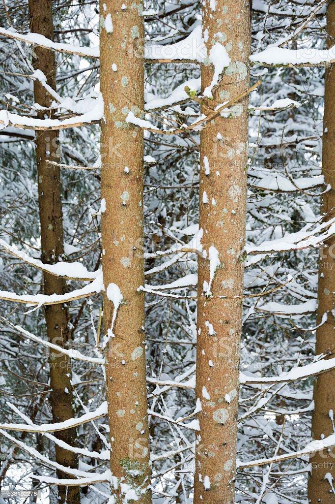 Winterwald stock photo