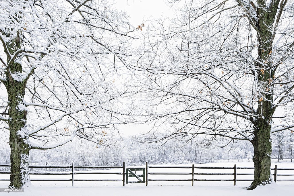 Winterwonderland of snow covered trees, fields and wooden fence. -XXXL royalty-free stock photo