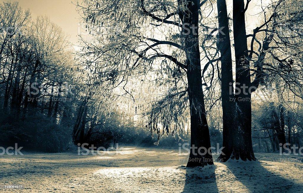 Winterwonders royalty-free stock photo