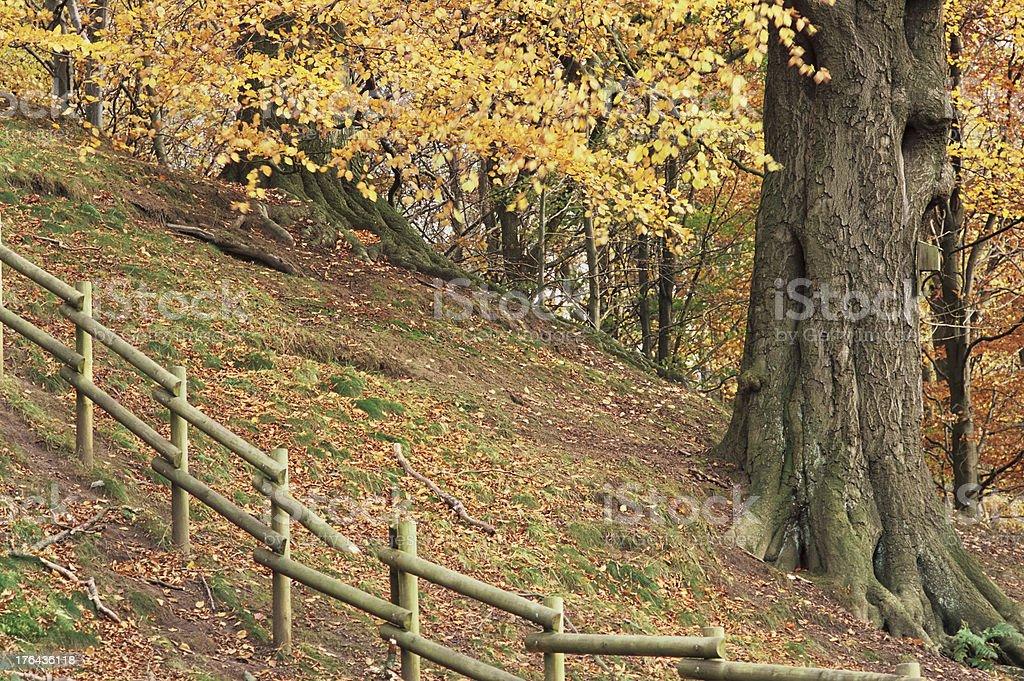 Wintery foliage, England royalty-free stock photo