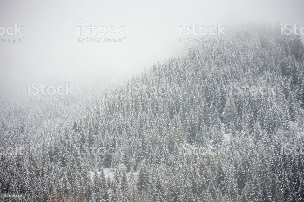 Wintery forest scene looking from car stock photo