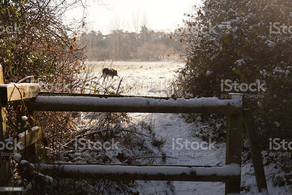 Wintery walk royalty-free stock photo