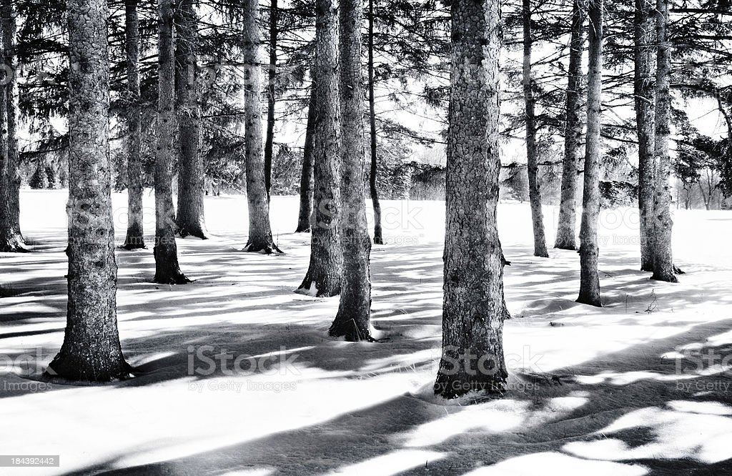 Wintry Forest Landscape stock photo