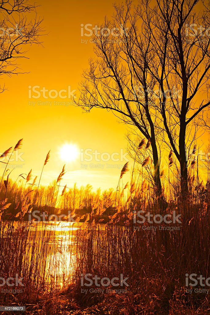 wintry lake in the sunset royalty-free stock photo