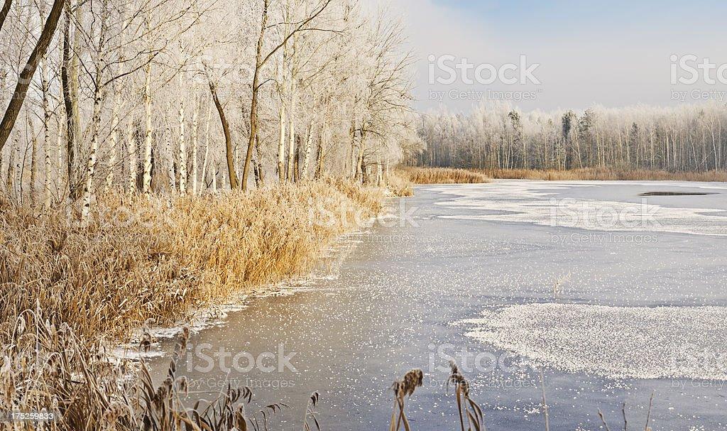 Wintry lakeshore royalty-free stock photo