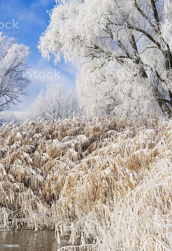 wintry riverbank royalty-free stock photo