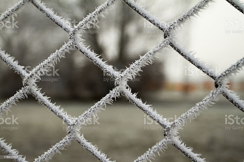 wire fence with hoarfrost royalty-free stock photo
