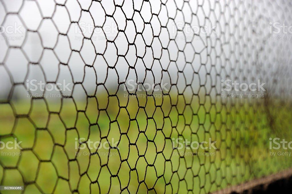 Wire Mesh Window Selective Focus stock photo