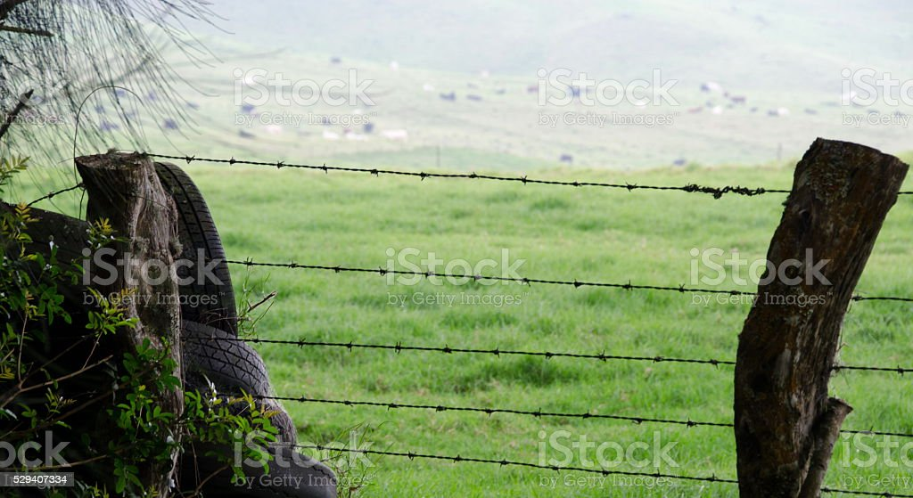 Wired fence and recycled tires near Kohala Mountain Road stock photo