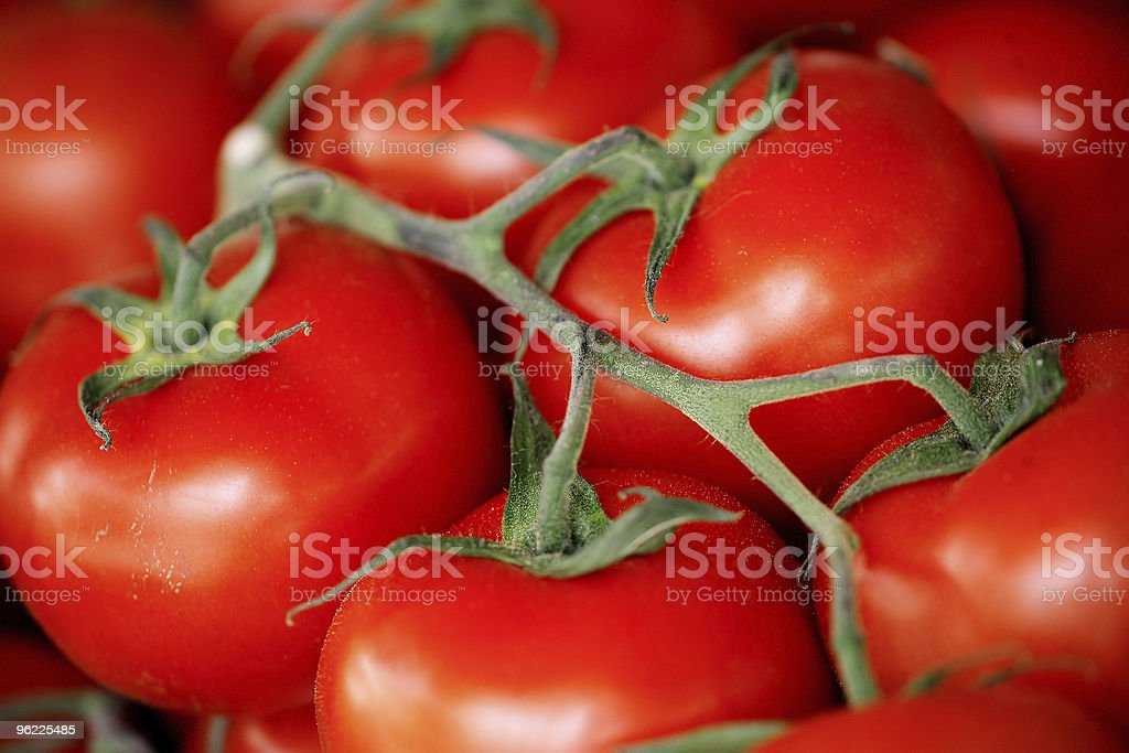 Wired tomato stock photo