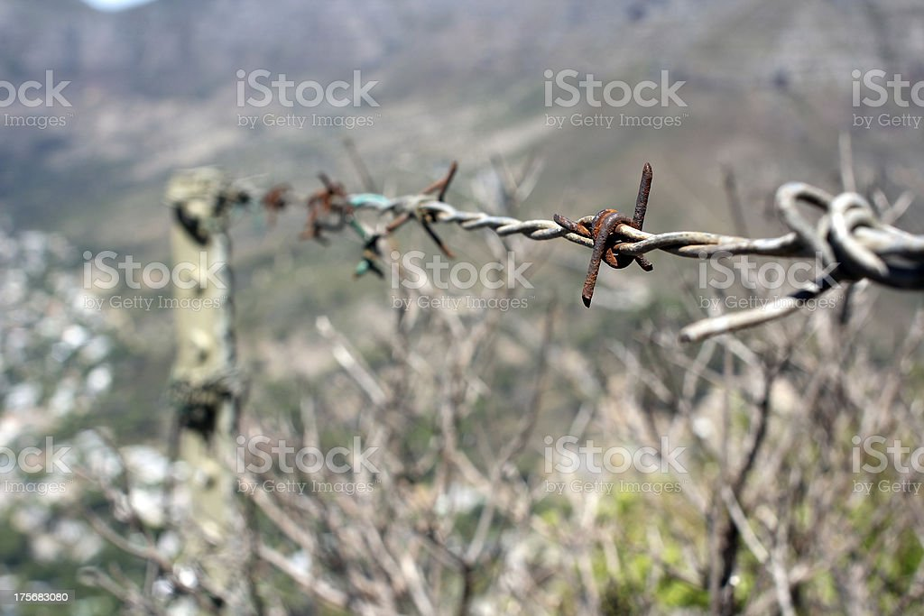 Wire-Netting royalty-free stock photo