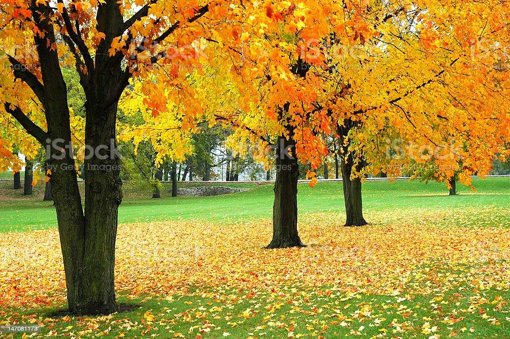 Wisconsin Fall Foliage stock photo