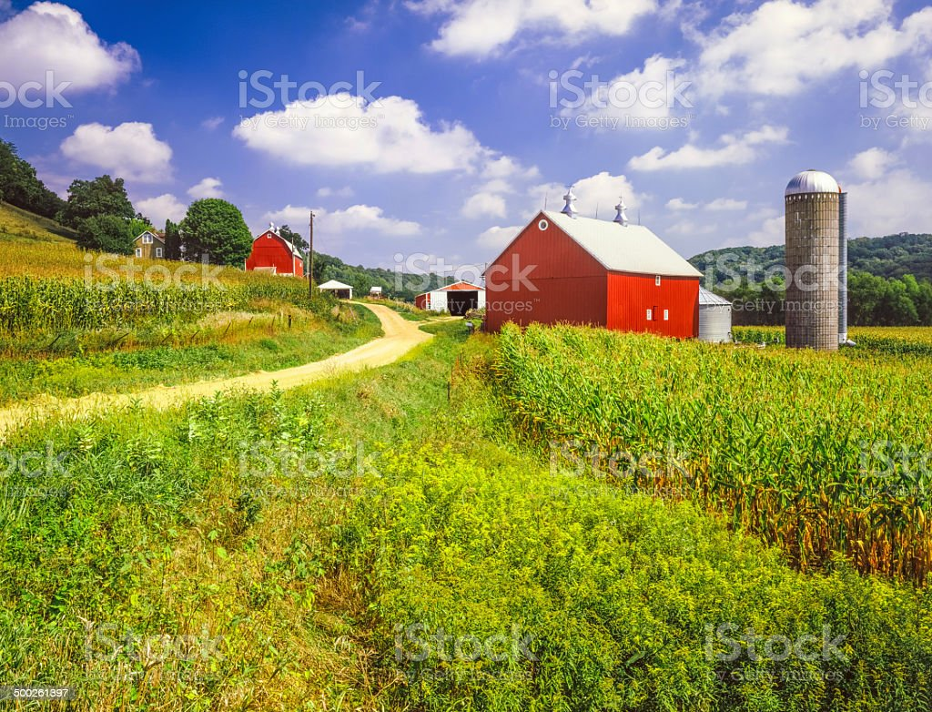 Wisconsin farm and corn field stock photo
