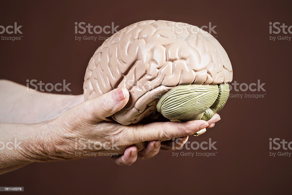 Wisdom or Alzheimers? Wrinkled old hands hold model brain royalty-free stock photo