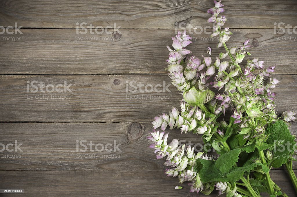 Sage bouquet stock photo